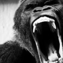 ape-shifter